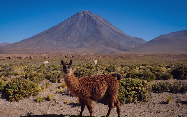 PENGUINS, PUMAS & PATAGONIA - <BR>AN UNBEATABLE EXPERIENCE