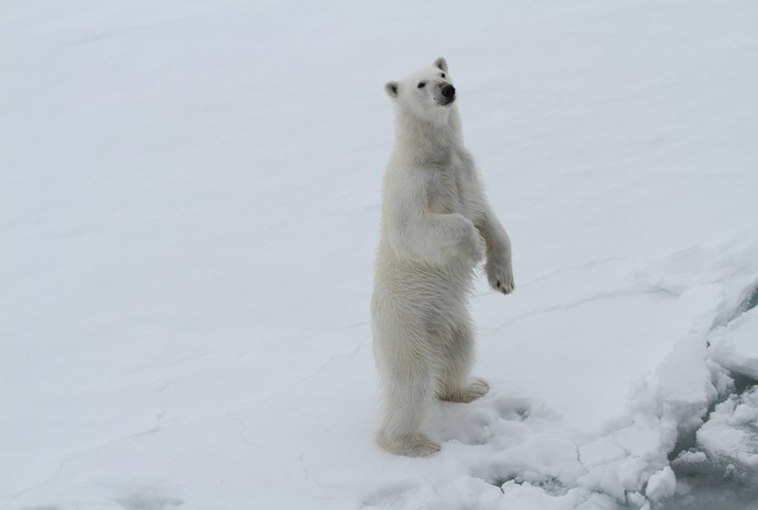 Spitsbergen Photography Polar Bear Special 13 days