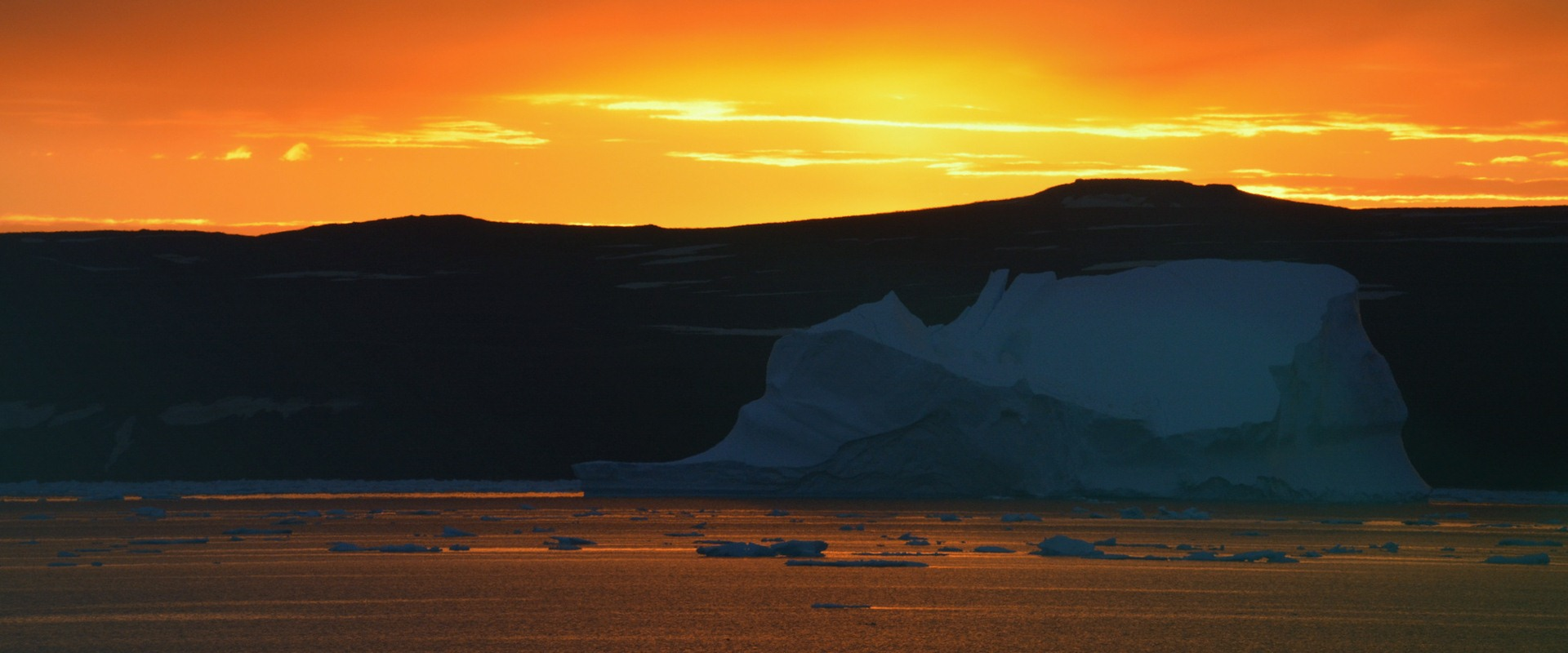 Polar parrots of the Aynov Islands. Expedition to the extreme north of Russia 33