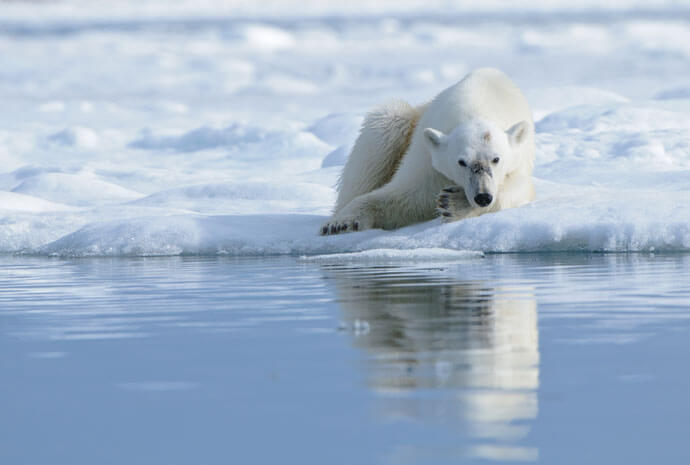 North Spitsbergen Polar Bear Special 8 days