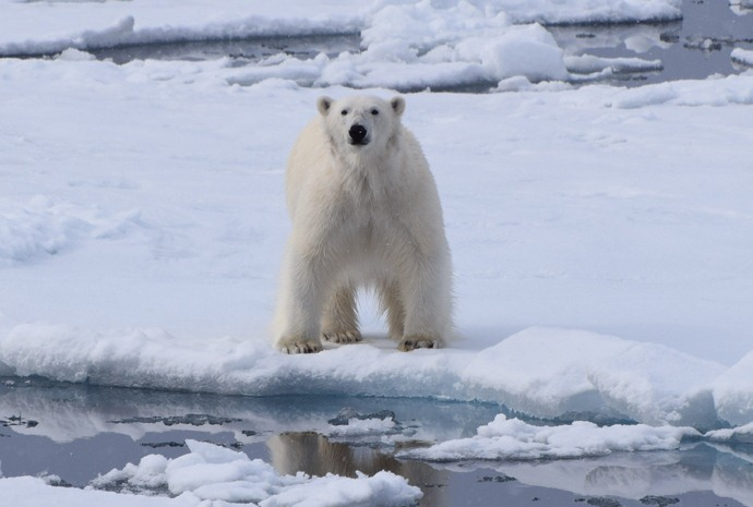 Introduction to Spitsbergen: Polar Bear Safari 9 days