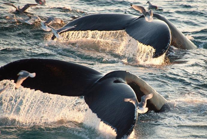 Fair Isle & Jan Mayan to Spitsbergen Whale Safari 10 days