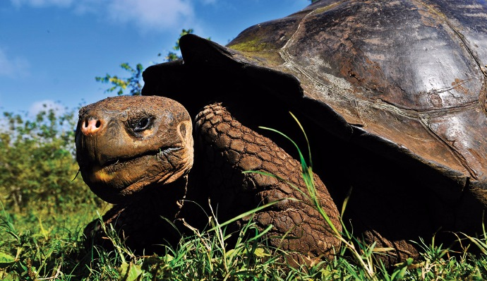 Galapagos North Central Islands in Luxury 10 days