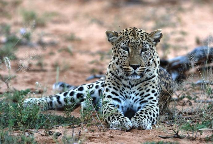 Highlights of Zimbabwe & Botswana Self Drive 16 days