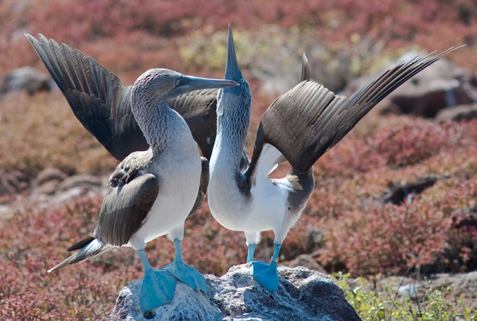 Galapagos & Ecuadorian Cloud Forest - Small Group Sailing Ship Special 13 days