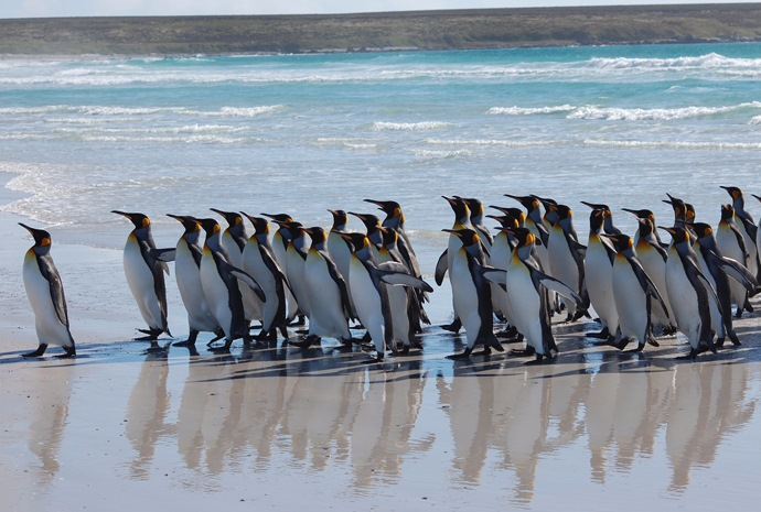 Unique Falklands, South Georgia, Antarctica Land & Sea Combo 26 days