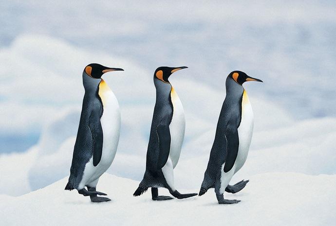 Christmas in Falklands & Antarctica in Luxury 15 Days