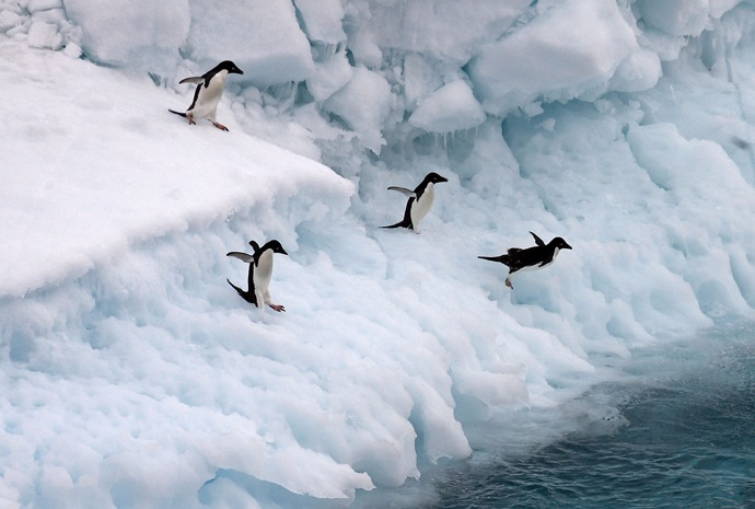 Chilean Fjords, Cape Horn, Antarctica & Falklands 18 days