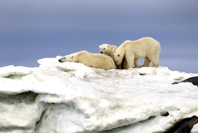 Norway, Bear Island & Spitsbergen 12 Days