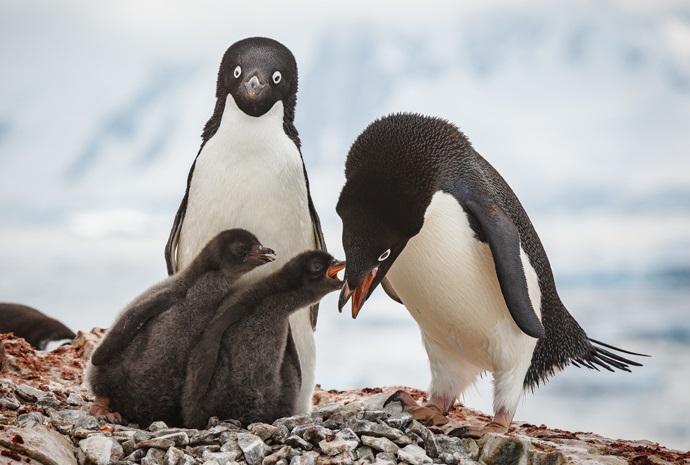 Antarctic Explorer 11 days