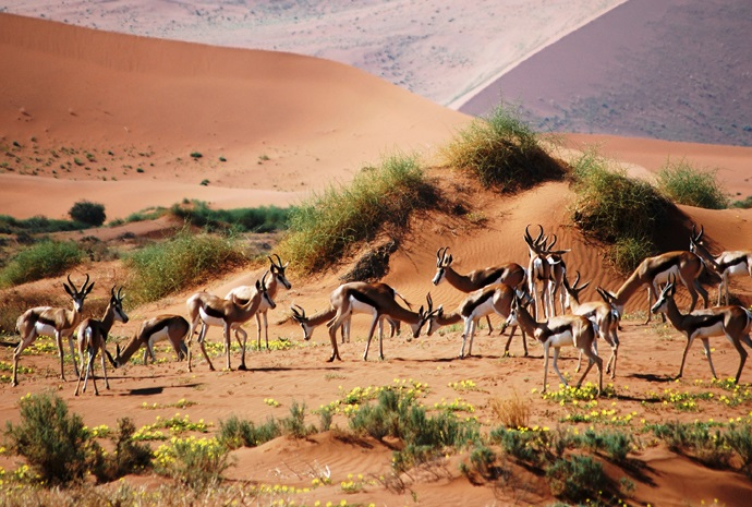 Namibian Camping Adventure 14 Days. Small Group Max 14 Passengers