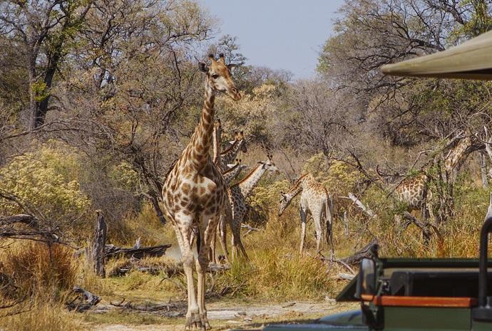 The Best of Northern Botswana 9 Days