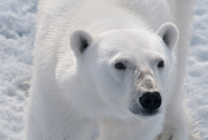 Spitsbergen & Franz Josef Land Adventure 25 days