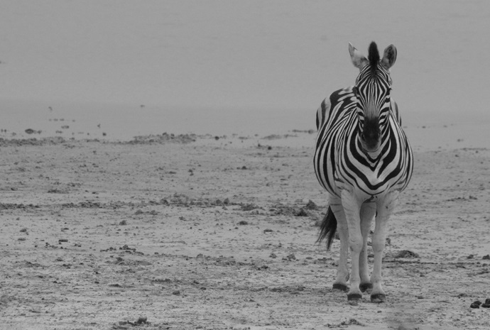 Namibia Photography Special 13 Days