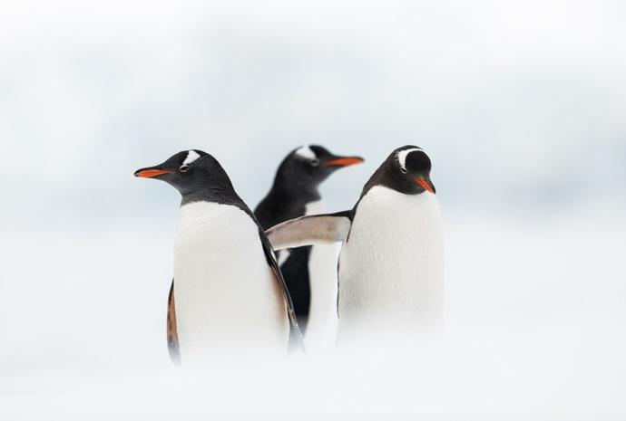 Christmas in Antarctica 17 days