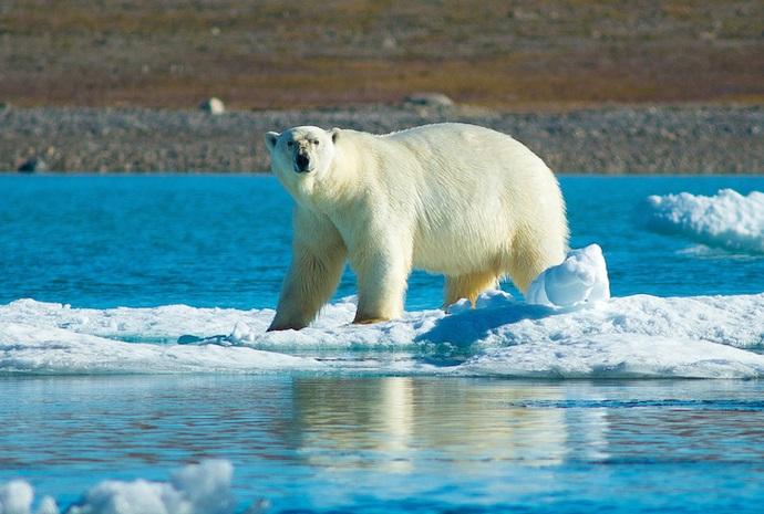 High Arctic Explorer 10 days
