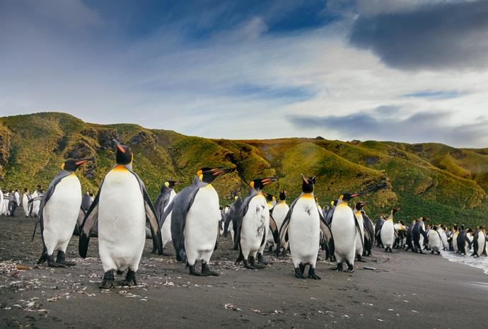 Falklands, South Georgia and Antarctic Peninsula 20 days