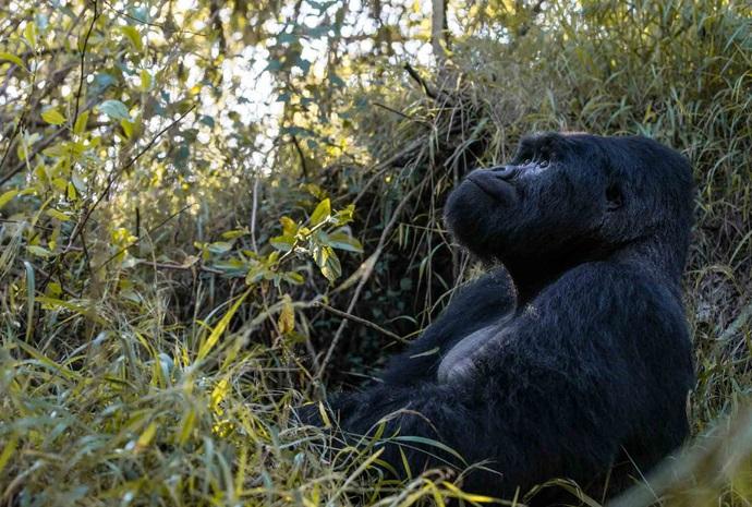 Luxury Rwanda Gorilla Trekking 5 Days