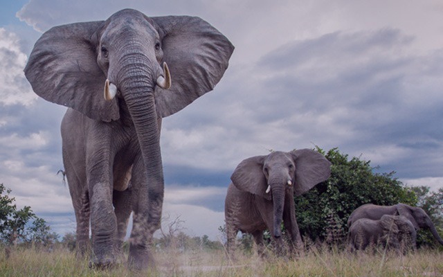 An unspoilt & friendly country teeming with wildlife
