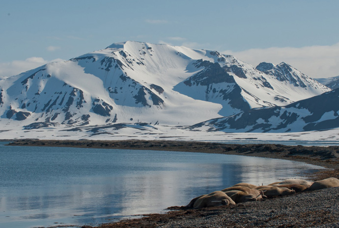 Around Spitsbergen 10 days