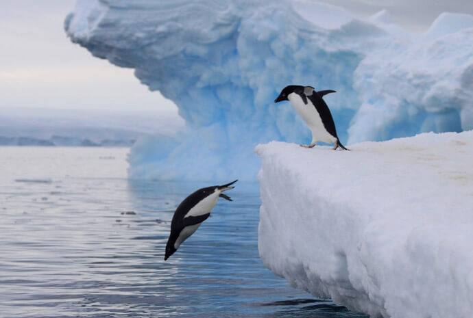 Ross Sea - In the Wake of Scott & Shackleton plus NZ Sub-Antarctic Islands 30 days