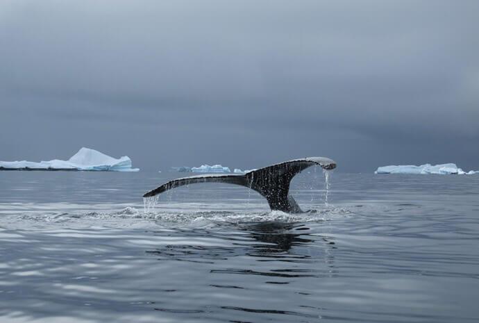 Antarctica, South Georgia & Falklands 18 days