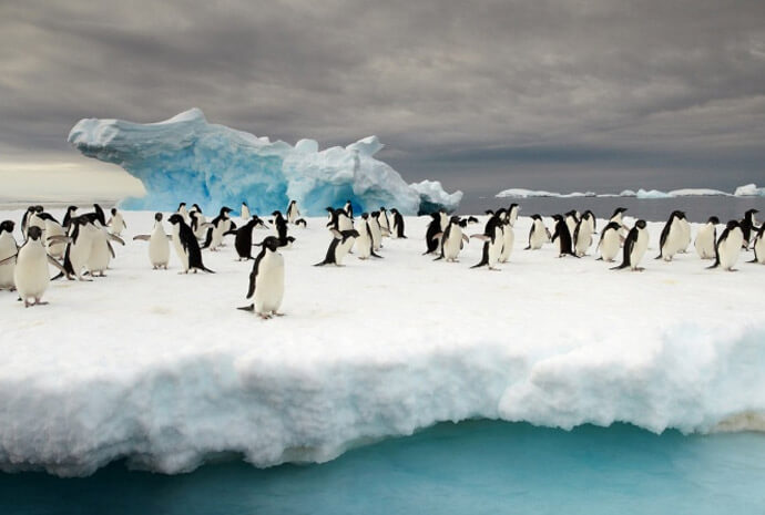 East Antarctica & Subantarctic Islands 25 days
