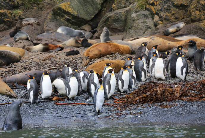 South Georgia & Antarctic Peninsula Penguin Safari 16 days