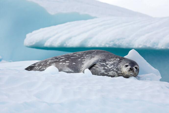 South Georgia, Antarctica & The Falklands 17 days