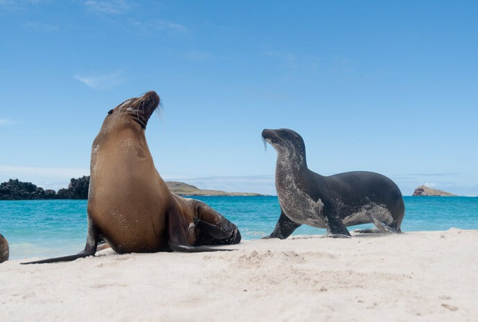 Family Galapagos – South, East & Central Islands - North & Central Islands also Available
