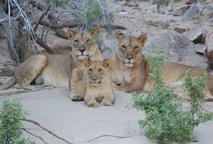 12 Day Guided Wildlife Safari