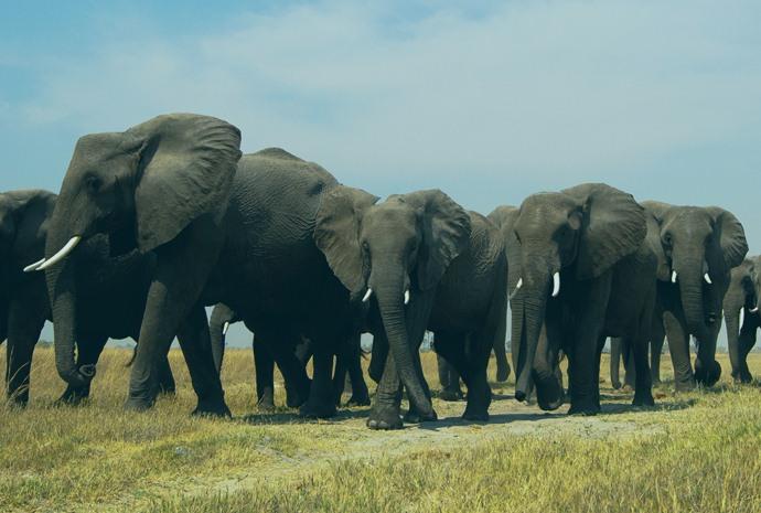 Botswana and Victoria Falls in Luxury