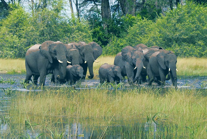 Best of Botswana - 11 day Multi-Destination Adventure