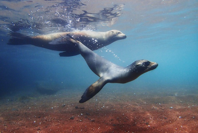 Ultimate Galapagos Whales, Wildlife & Birds + Ecuador Central Highlands