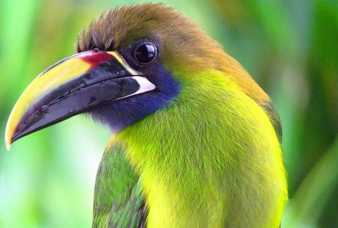 13 Day Birding in Costa Rica