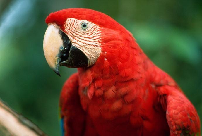10 Days Pantanal and Amazon