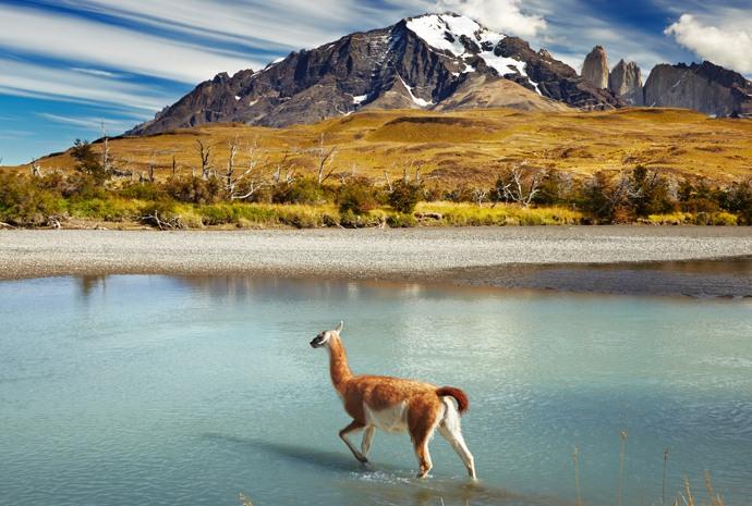 In-Depth Patagonia with Pumas + Santiago & Valparaiso 15 days