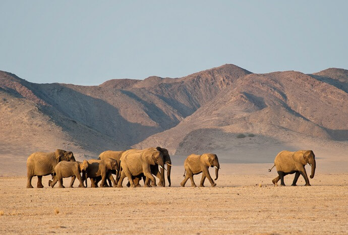 Private Desert Wildlife Guided Safari 14 days