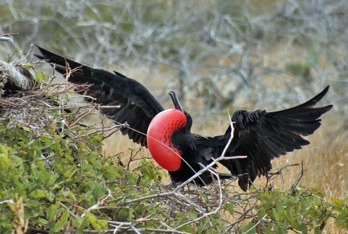 Galapagos West, Central & East Islands