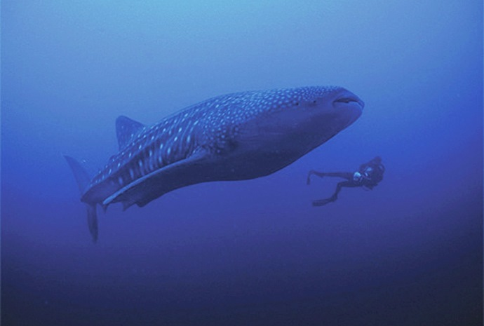 Scuba Diving in the Coco Islands