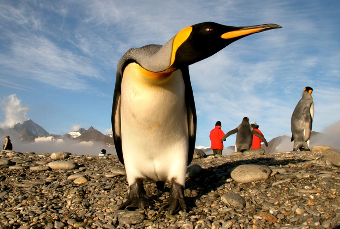 Falklands, South Georgia & Antarctic Islands 20 days