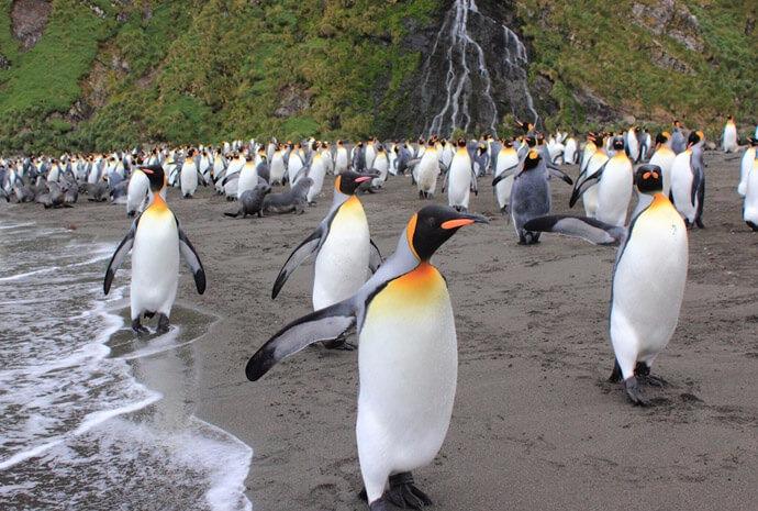 Falklands & South Georgia Photography Special 15 days