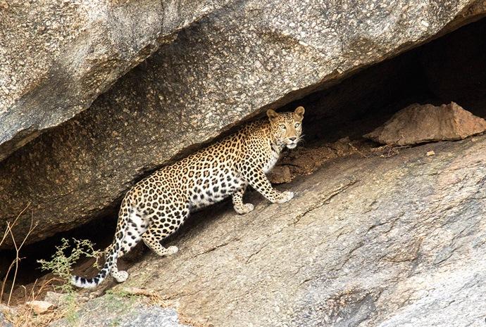North India: Focus on Wildlife 14 days