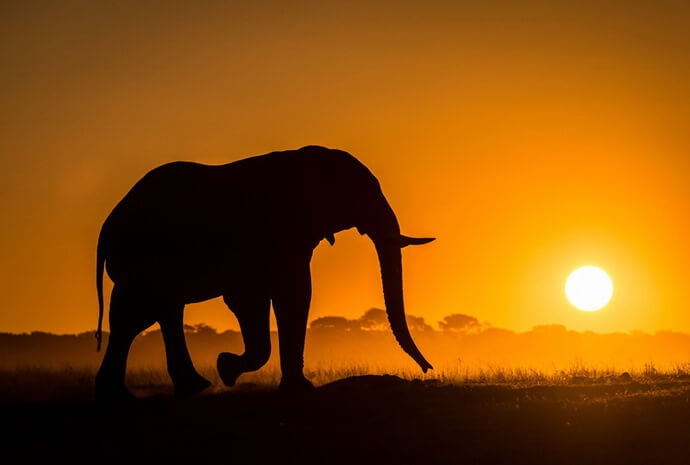 Zimbabwe & Botswana Elephant Paths 11 Days
