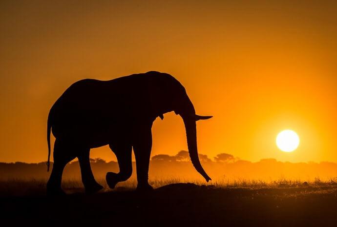 Zimbabwe & Botswana Elephant Paths 11 Days