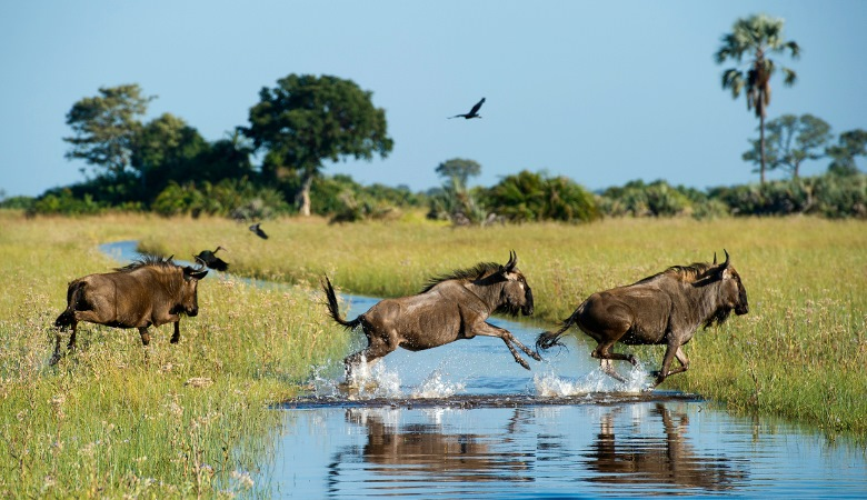WILDFOOT Travel: Zimbabwe & Botswana Self Drive for 15 nights
