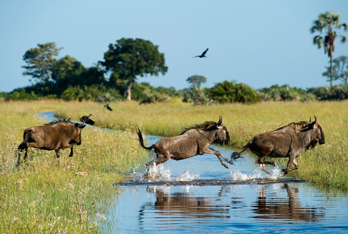 Victoria Falls and Botswana Highlights 11 days