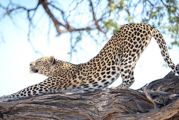 Victoria Falls & Botswana Lodge and Mobile Combo 13 days