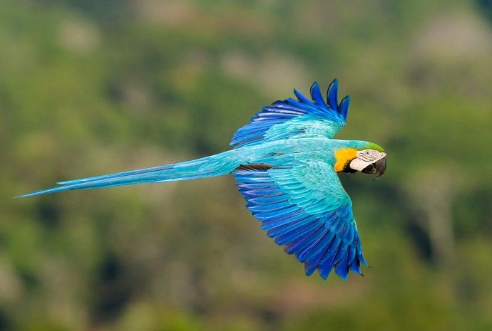 Pantanal and Amazon Wildlife Spectacular 10 days