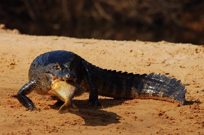 Pantanal & Iguassu Falls Wildlife Adventure 12 days